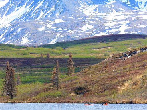 Mid-summer in Interior Alaska (July check-in)