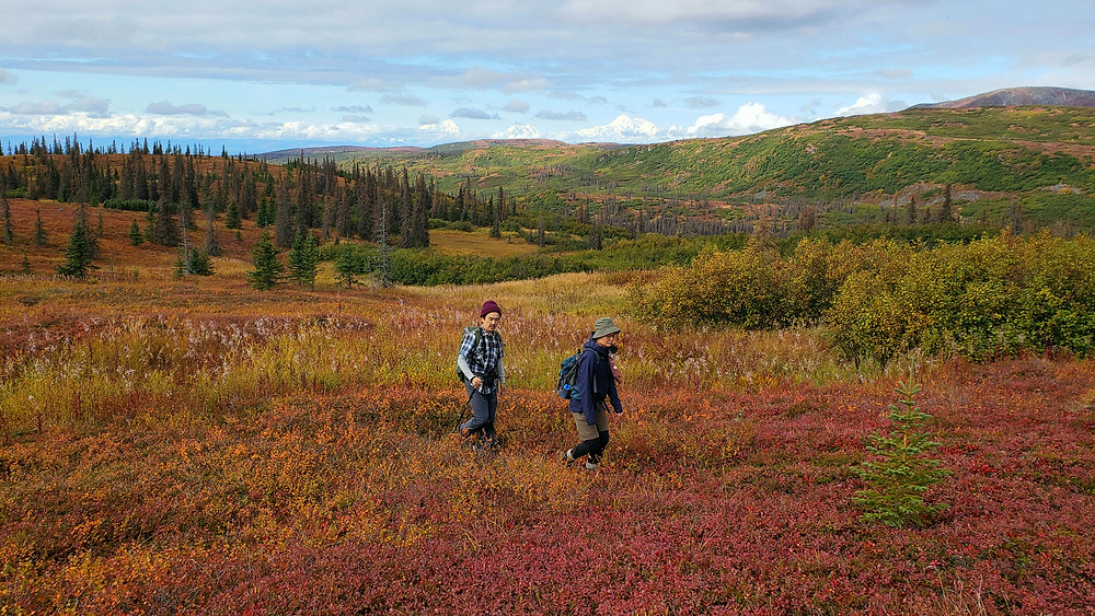 Visitors to Caribou Lodge Alaska hike through open alpine tundra above treeline