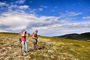 Hiking on alpine tundra and looking for animals near Denali national park Alaska
