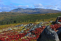 Open Tundra hiking in the Denali region of Alaska