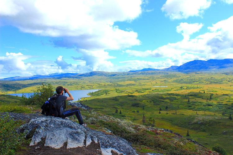 Hiking and wildlife viewing-lodging near denali park