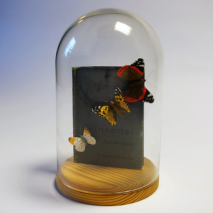 'Butterflies and Book' by Kate Kato