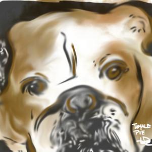 Dog Angel - January 6, 2021.jpg