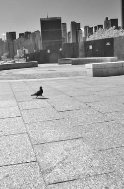 Street Photography, LI City (1)