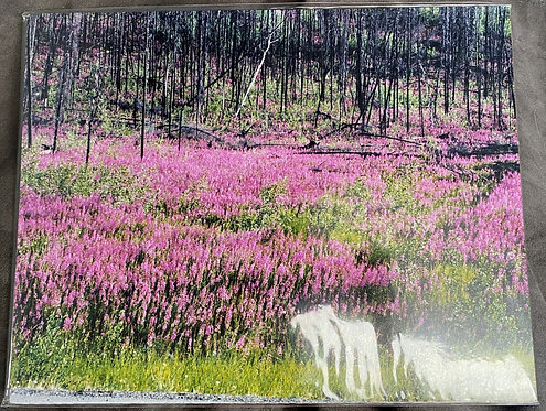 """Fireweed Along the """"ALCAN"""""""