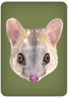 Quoll-offspring-outer-ring_edited.png