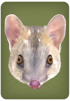 Quoll-parent-brown_edited.png