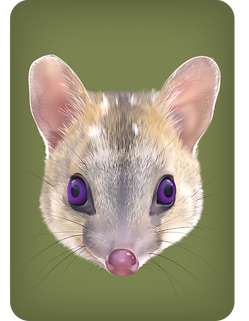 Quoll-offspring-purple_edited.png
