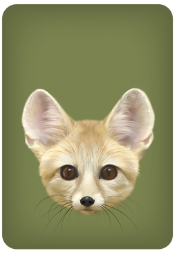 Fennec-offspring-small_edited.png