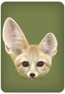 Fennec-offspring-one-of-each_edited.png