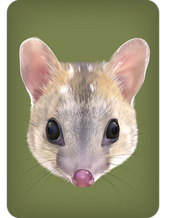 Quoll-offspring-dark-brown_edited.png