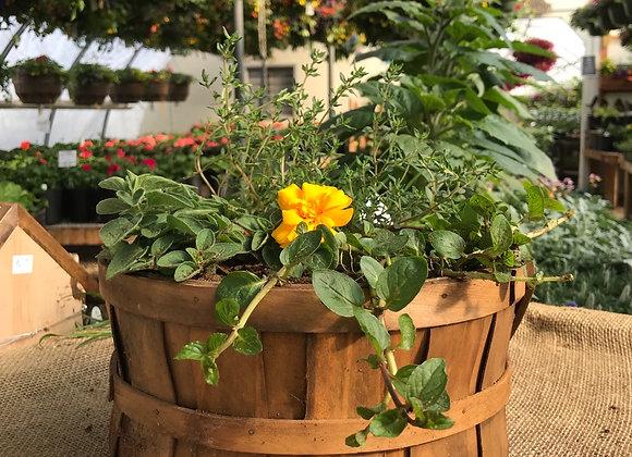 Herb Planter PL0093