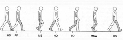 A step-by-step illustration of a human figure walking with a heel-striking gait