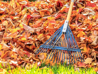 The Yardist's Top Ten Lawn and Garden Tips For Fall
