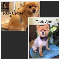 Teddy before and after _-) __#paulaspoms#mypompalace #mypom #pompalace #pomeranian #ilovedogs #ilove