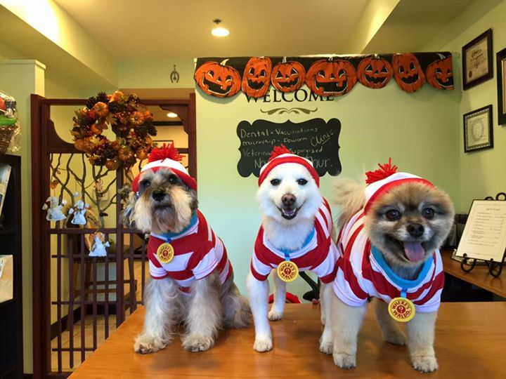 Happy Halloween ! From Cleo , Momo and Sherman!