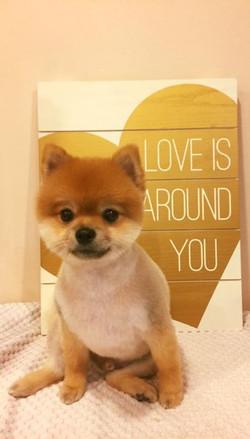 Hug lots of doggies today _-( _Abraza a muchos perritos hoy _-(