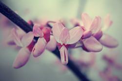 fiorinfiorello07