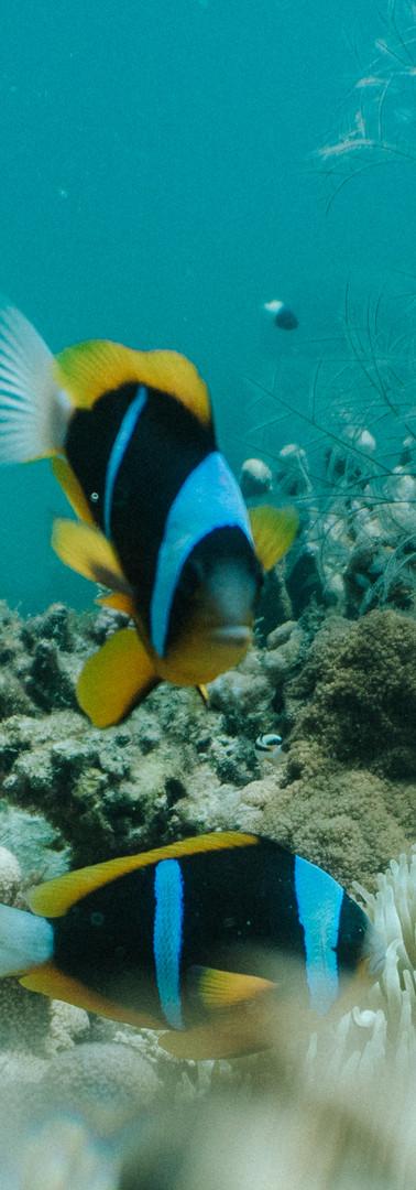 Explore untouched coral reefs
