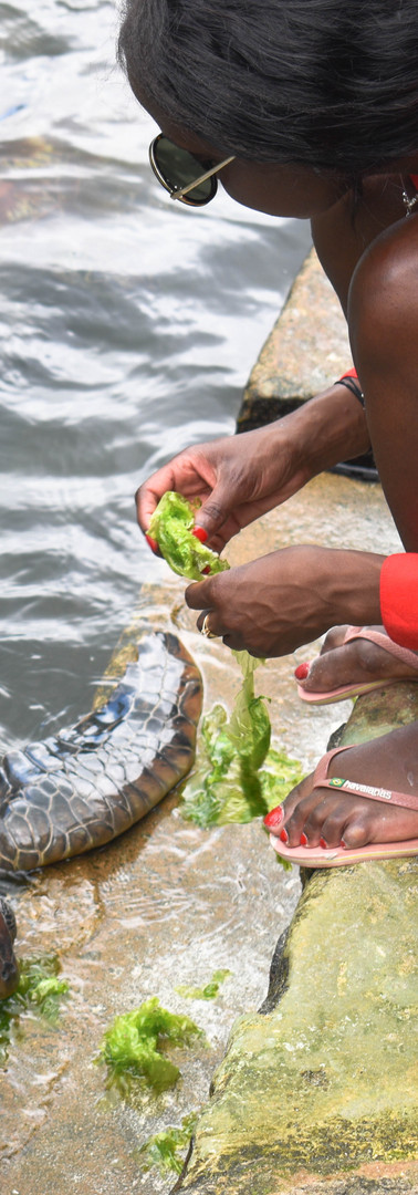 Mnarani Turtle Sanctuary