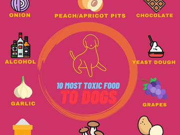 10 Most Toxic food for dogs