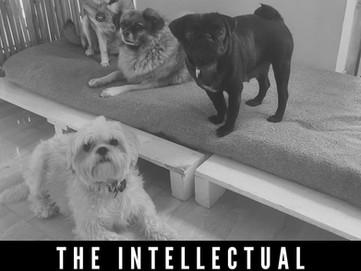 THE INTELLECTUAL BARK SOCIETY
