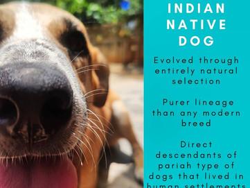 Native Dog
