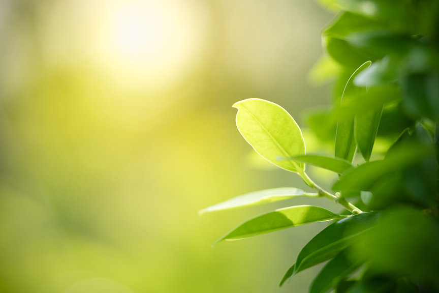Closeup nature view of green leaf on blu