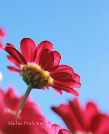 Spring Colors.JPG