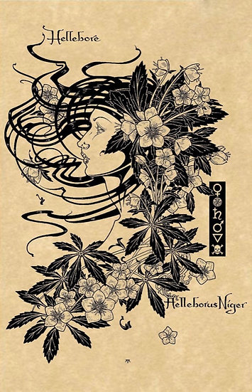 Hellebore ~Signed Maxine Miller Print