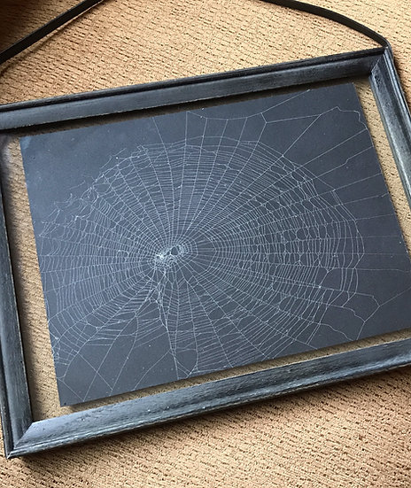 Framed (actual) Spider Web