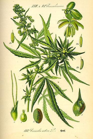 CLASS: Wed 1/29 Cannabis Essentials & Handcrafted Remedies w/ Michelle Lundquist