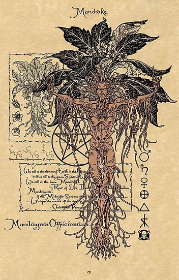 Mandrake ~Signed Maxine Miller Print