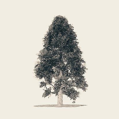 Tree 2 - Greyscale
