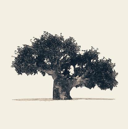 Tree 1 - Greyscale