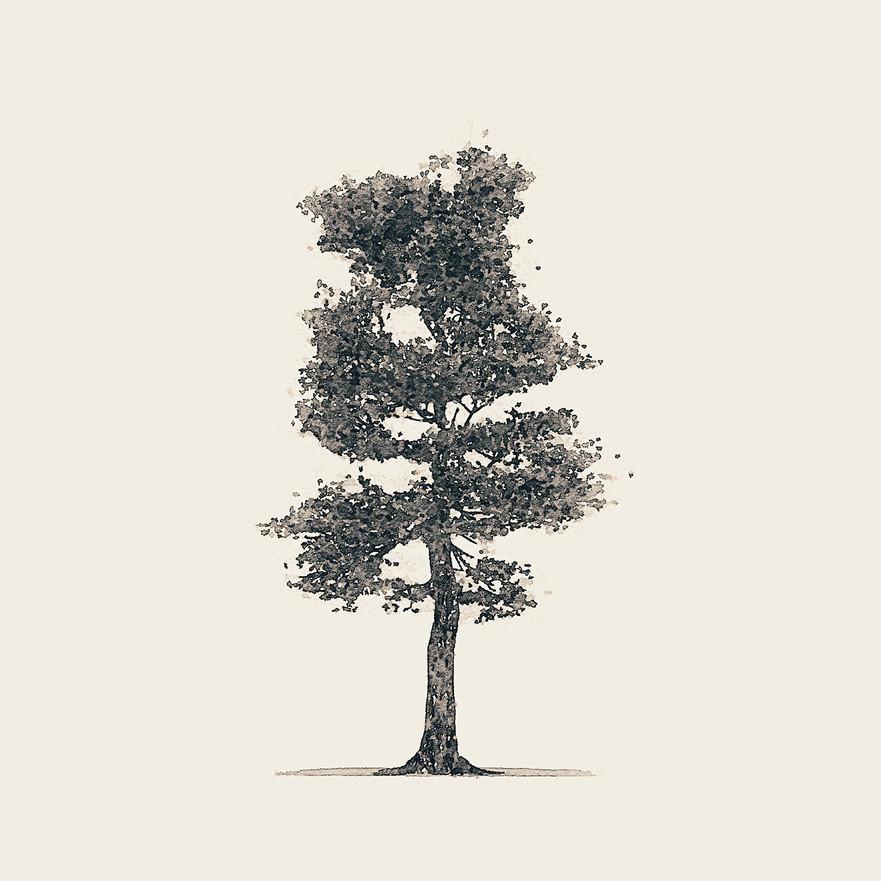 Tree 3 - Greyscale
