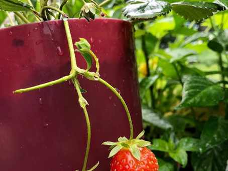 6 Must Have Products for Your Patio Garden