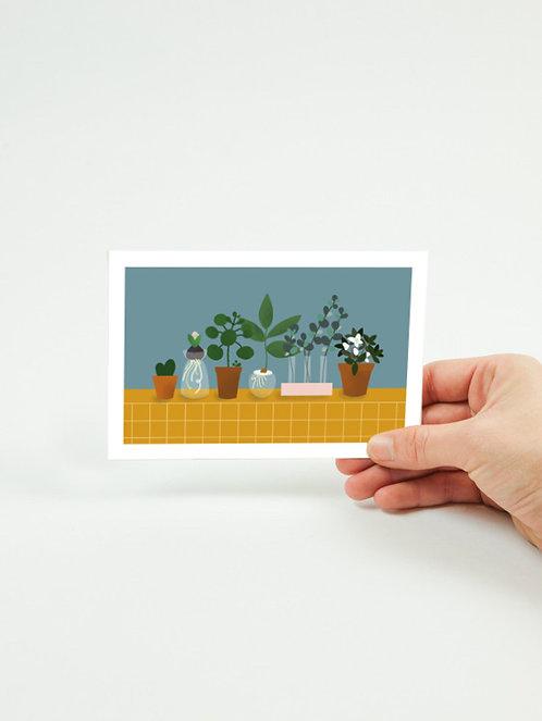 Carte postale PLANTES