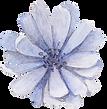 Frente azul de la flor