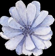 Blue Flower Front