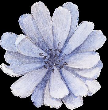 Blauwe Bloem Receptie