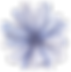 Frente flor azul