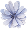 Fleur bleue avant