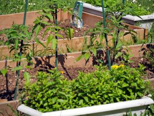 «Les petites graines», un jardin partagé au CSCB