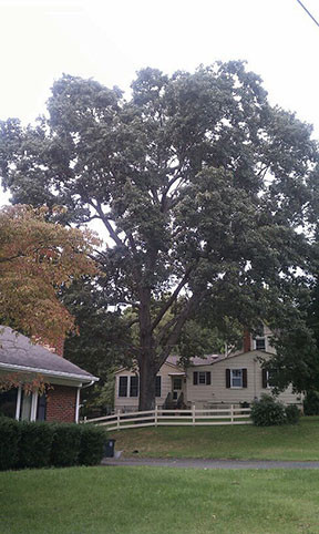 Registering and protecting heritage trees