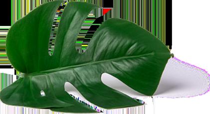 leaf-icon-1.png