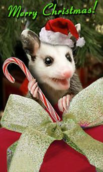 A Possum Track Christmas!