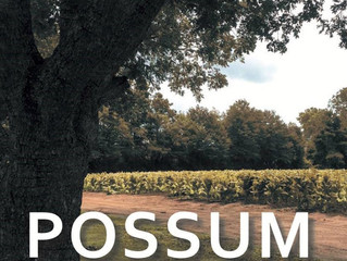 Possum Track Chronicles Now Available!