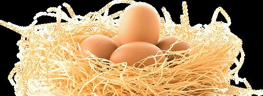 chicken-bird-egg-nest-chicken-a9cfd325c0