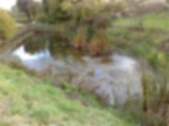 pond_empty.jpg